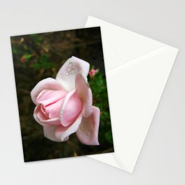 Blooming Light Pink Rose with Water Drops Stationery Cards