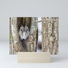 Sleeping Screech owl Mini Art Print