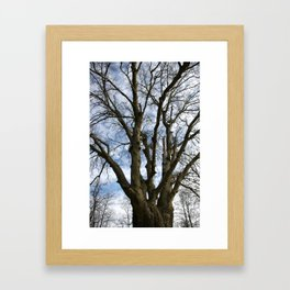 Old Winter Tree Framed Art Print