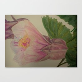 Pink Flowering Maple watercolor pencil sketch Canvas Print