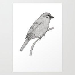 A Bird named Johan Art Print