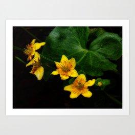Marsh Marigold Art Print