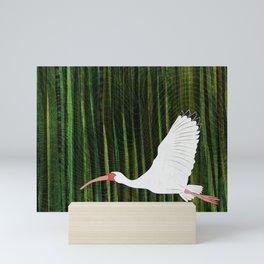 American White Ibis In Flight Mini Art Print