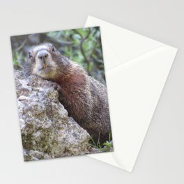 How Do My Teeth Look? Stationery Cards