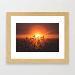 Sunsets and Weeds Framed Art Print