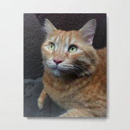 Garfield the stray cat Metal Print