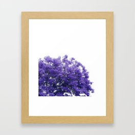 Purple Jacaranda II Framed Art Print