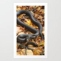 Blacksnake Art Print