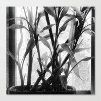 bamboo Canvas Prints featuring Bamboo by Lindzey42