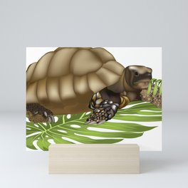 Tortuga Hade Mini Art Print