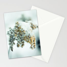 Frost & beauty Stationery Cards