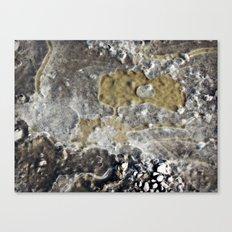 A Moment Frozen  Canvas Print