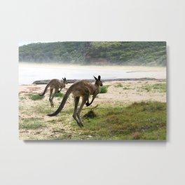 Twin Kangaroos Metal Print
