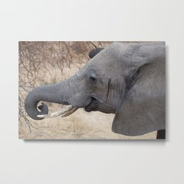 Smiley Elephant! Metal Print