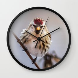 Winter Redpoll Wall Clock