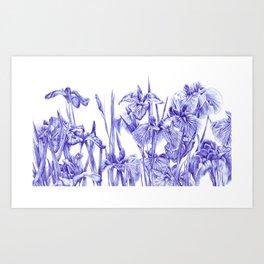 Iris Field Art Print