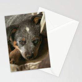 A Western Pup Stationery Cards