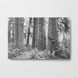 Forest Trail in Black and White Metal Print