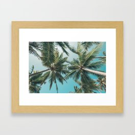 Looking up at tropical palm trees in the Maldives Framed Art Print