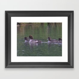 Ducks on Marsh Framed Art Print