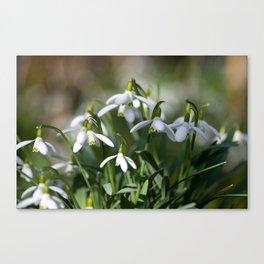 Floral Snowdrops! Canvas Print