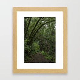 Jack London State Park Framed Art Print