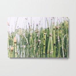 Bamboo, I Metal Print