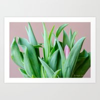 Spring Tulips from SLReflexions, Inc. Art Print