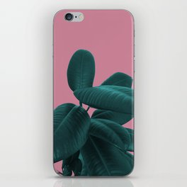 Ficus Elastica #11 #WildRose #decor #art #society6 iPhone Skin