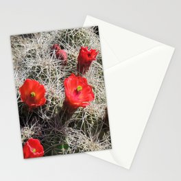 A Hedgehog Cactus Looks Sunward Stationery Cards