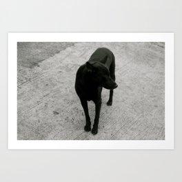 lonely dog Art Print