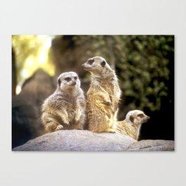 Act Natural Meerkats Canvas Print