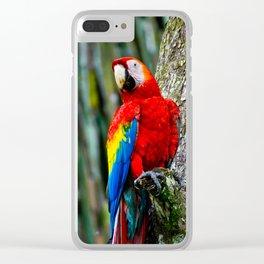Scarlet Macaw Bird Costa Rica Clear iPhone Case