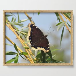 Mourning Cloak Butterfly Sunning Serving Tray
