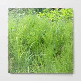 Watercolor Forb, Field Horsetail 01, Boulder, Colorado Metal Print