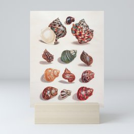 Unknown Title by Maria Sibylla Merian // Vintage Sea Shells Colorful Shapes and Sizes with Shadows Mini Art Print
