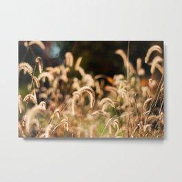 Golden Autumn Grass Metal Print