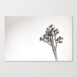 Joshua Tree in Black & White Canvas Print