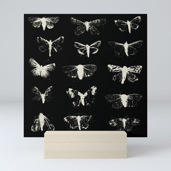 moths by zeljkica
