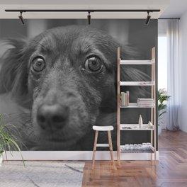 Dog portrait - Fine Art photography Wall Mural