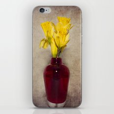 Daffodil Still iPhone & iPod Skin