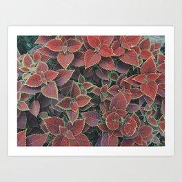 beautiful leaf pattern Art Print