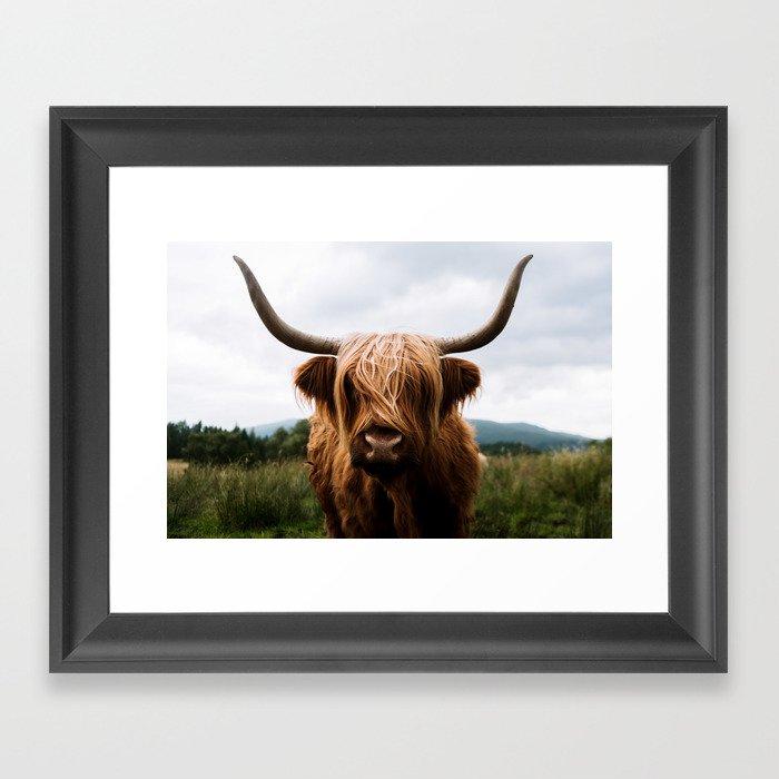Scottish Highland Cattle in Scotland Portrait II Gerahmter Kunstdruck
