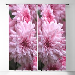 Astounding astra flowers Blackout Curtain