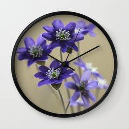 Bouquet of fresh dark violet Hepatica Wall Clock