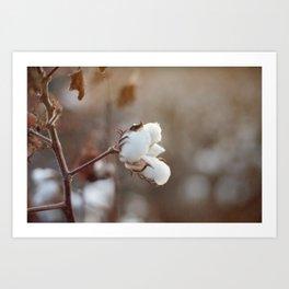 Sweet Cotton Art Print