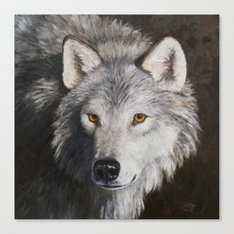 Gray Wolf Face Canvas Print