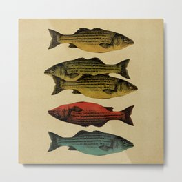 One fish Two fish... Metal Print