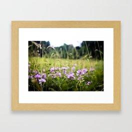 A Hint of Purple Framed Art Print