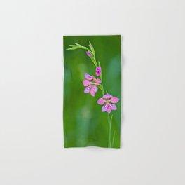 Beauty in nature, wildflower Gladiolus illyricus Hand & Bath Towel
